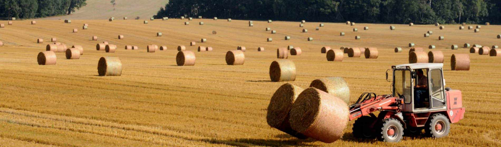 SAP Business One for Agriculture and Horticulture
